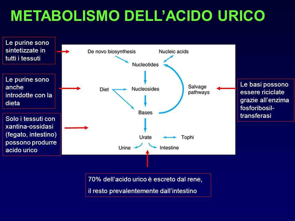 METABOLISMO DELLACIDO URICO Le purine sono anche introdotte con la dieta Le purine sono sintetizzate in tutti i tessuti Le basi possono essere ricicla