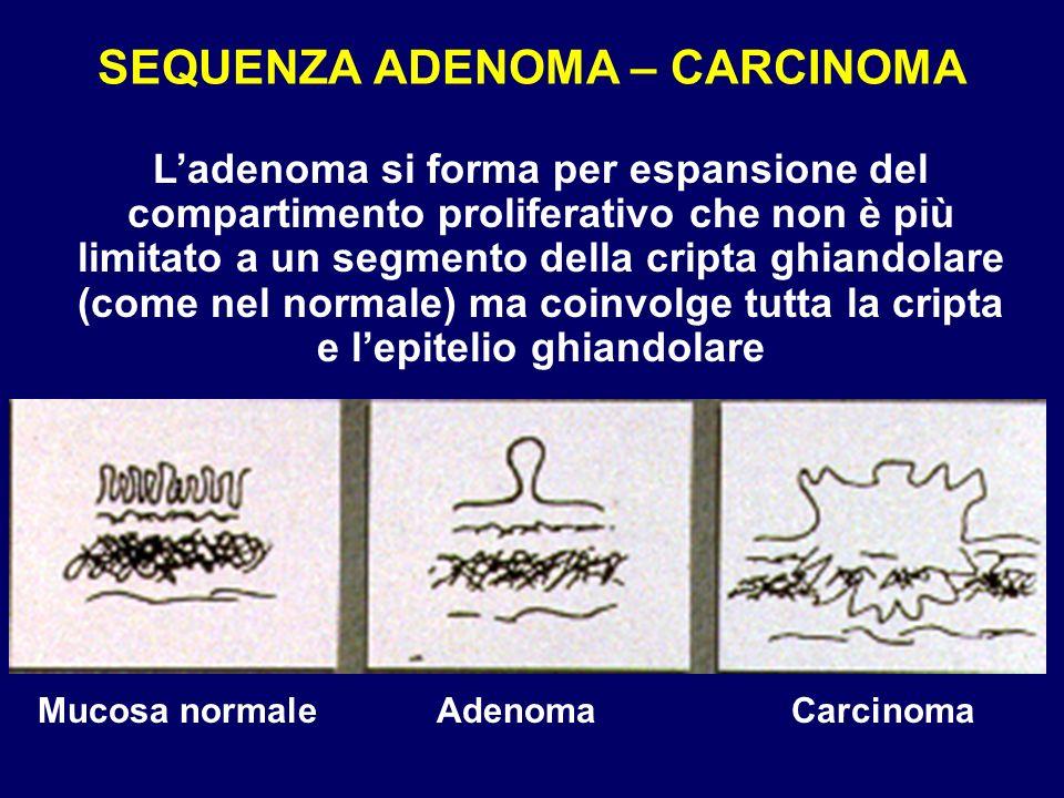 SEQUENZA ADENOMA – CARCINOMA Mucosa normaleAdenomaCarcinoma Ladenoma si forma per espansione del compartimento proliferativo che non è più limitato a