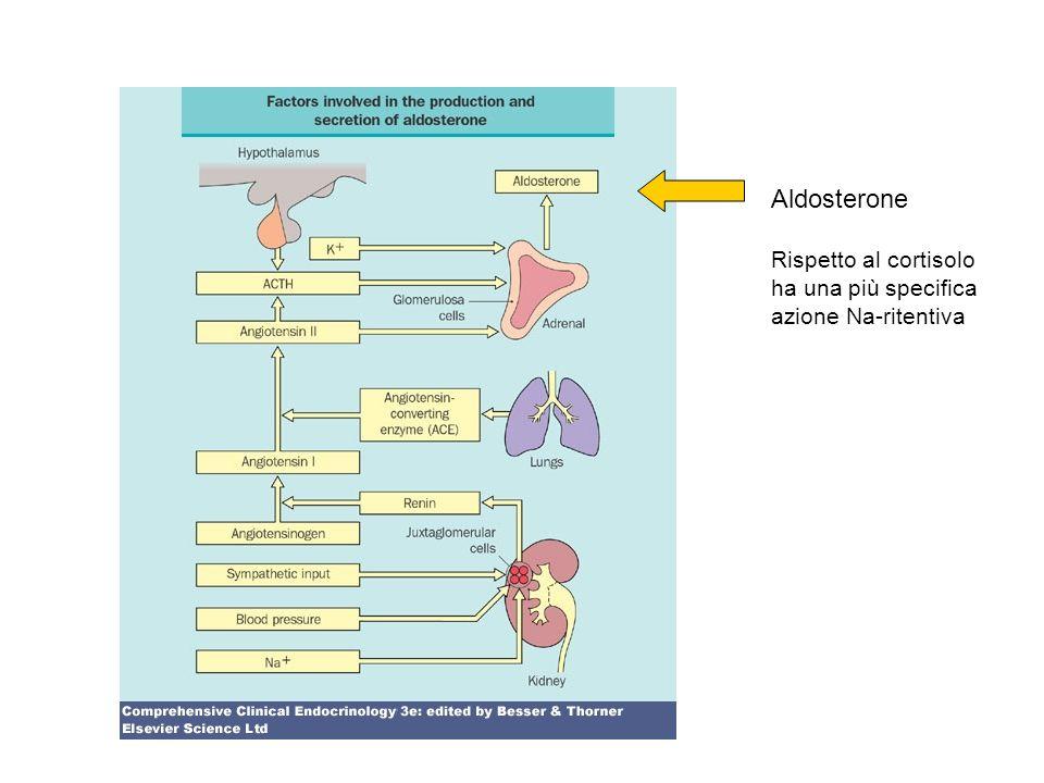 Aldosterone Rispetto al cortisolo ha una più specifica azione Na-ritentiva