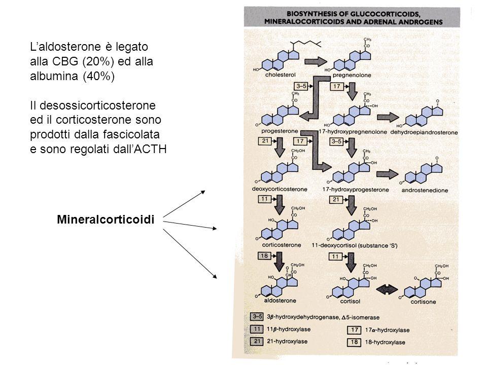 Mineralcorticoidi Laldosterone è legato alla CBG (20%) ed alla albumina (40%) Il desossicorticosterone ed il corticosterone sono prodotti dalla fascic