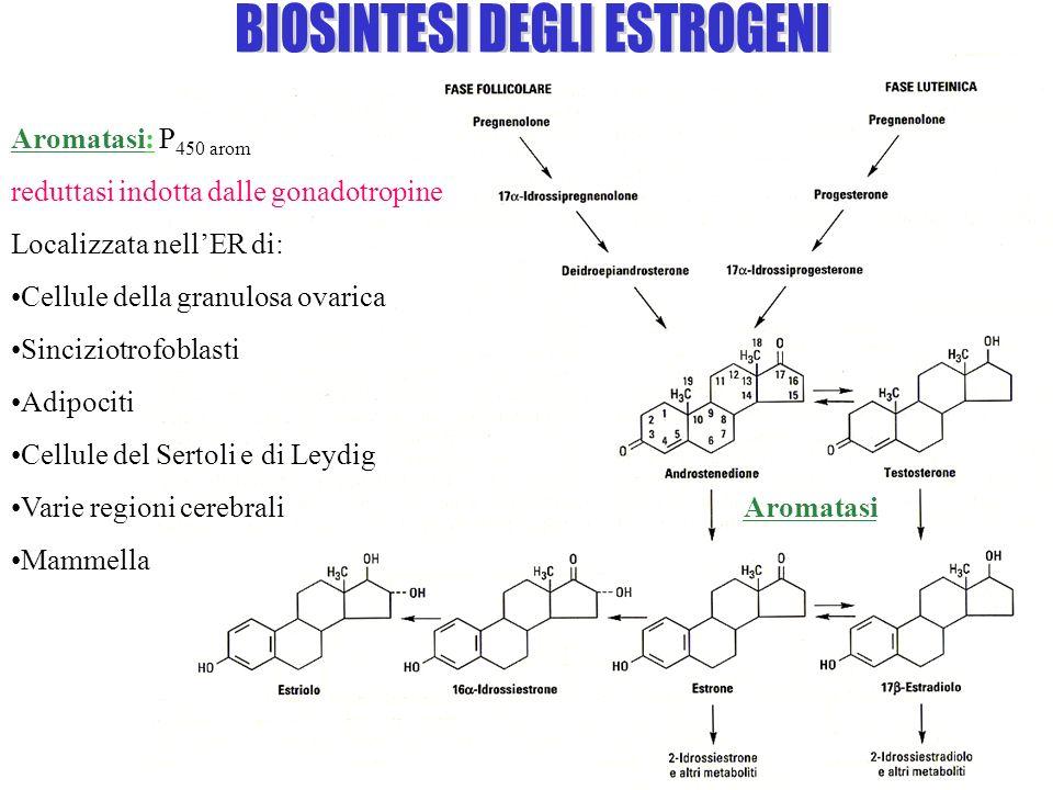 Aromatasi: P 450 arom / reduttasi indotta dalle gonadotropine Localizzata nellER di: Cellule della granulosa ovarica Sinciziotrofoblasti Adipociti Cel
