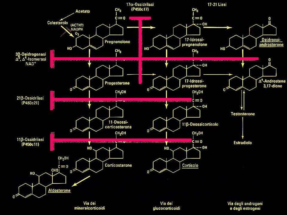 SERM S (SELECTIVE ESTROGEN RECEPTOR MODULATORS) TAMOXIFENE, TOREMIFENE Agonista: osso, fegato, endometrio Antagonista: tutti gli altri tessuti Utilizzato per la terapia e la prevenzione del Ca mammario RALOXIFENE Agonista: osso, cuore, fegato Antagonista: mammella Non attivo a livello dellendometrio Utilizzato in post-menopausa: prevenzione dellosteoporosi e del rischio cardiovascolare Effetti Collaterali:sintomi simil-influenzali vampate di calore crampi muscolari edema periferico aumentato rischio di tromboembolie