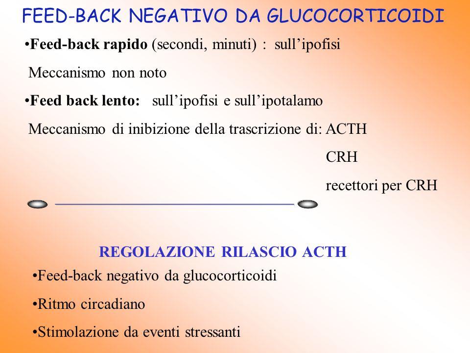FEED-BACK NEGATIVO DA GLUCOCORTICOIDI Feed-back rapido (secondi, minuti) : sullipofisi Meccanismo non noto Feed back lento: sullipofisi e sullipotalam