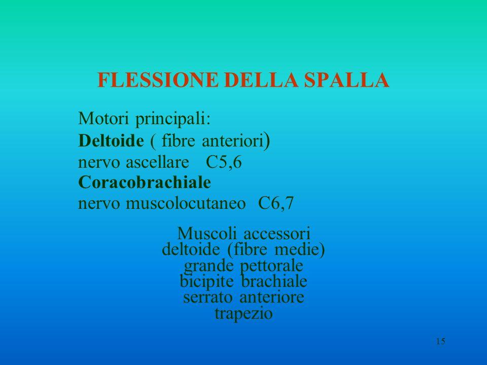 15 FLESSIONE DELLA SPALLA Motori principali: Deltoide ( fibre anteriori ) nervo ascellare C5,6 Coracobrachiale nervo muscolocutaneo C6,7 Muscoli acces