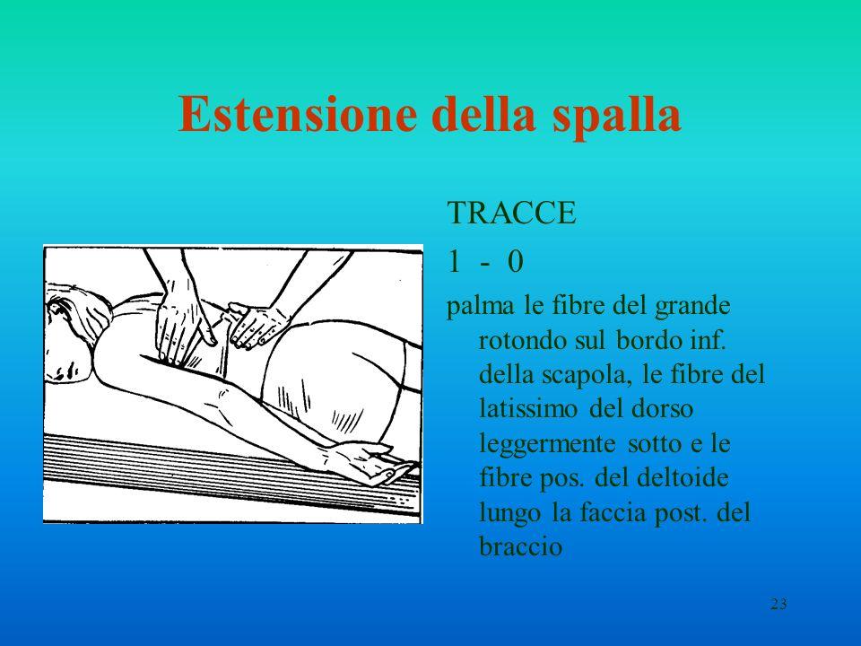 23 Estensione della spalla TRACCE 1 - 0 palma le fibre del grande rotondo sul bordo inf. della scapola, le fibre del latissimo del dorso leggermente s