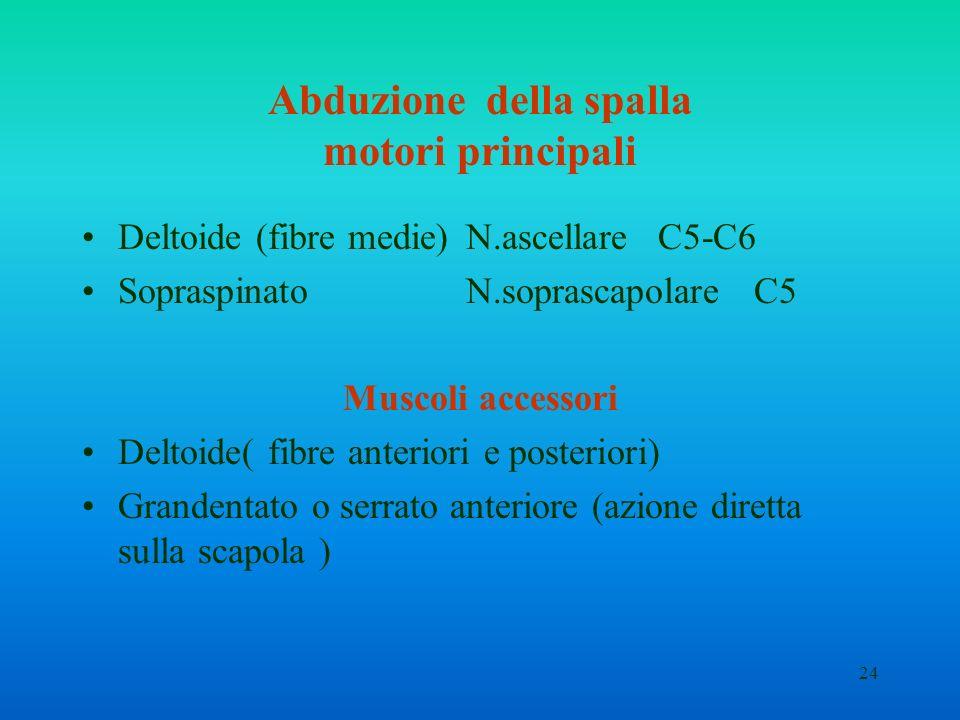 24 Abduzione della spalla motori principali Deltoide (fibre medie)N.ascellareC5-C6 SopraspinatoN.soprascapolareC5 Muscoli accessori Deltoide( fibre an