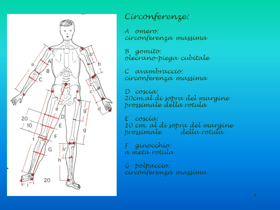 7 Circonferenze: Aomero: circonferenza massima Bgomito: olecrano-piega cubitale Cavambraccio: circonferenza massima Dcoscia: 20cm.al di sopra del marg