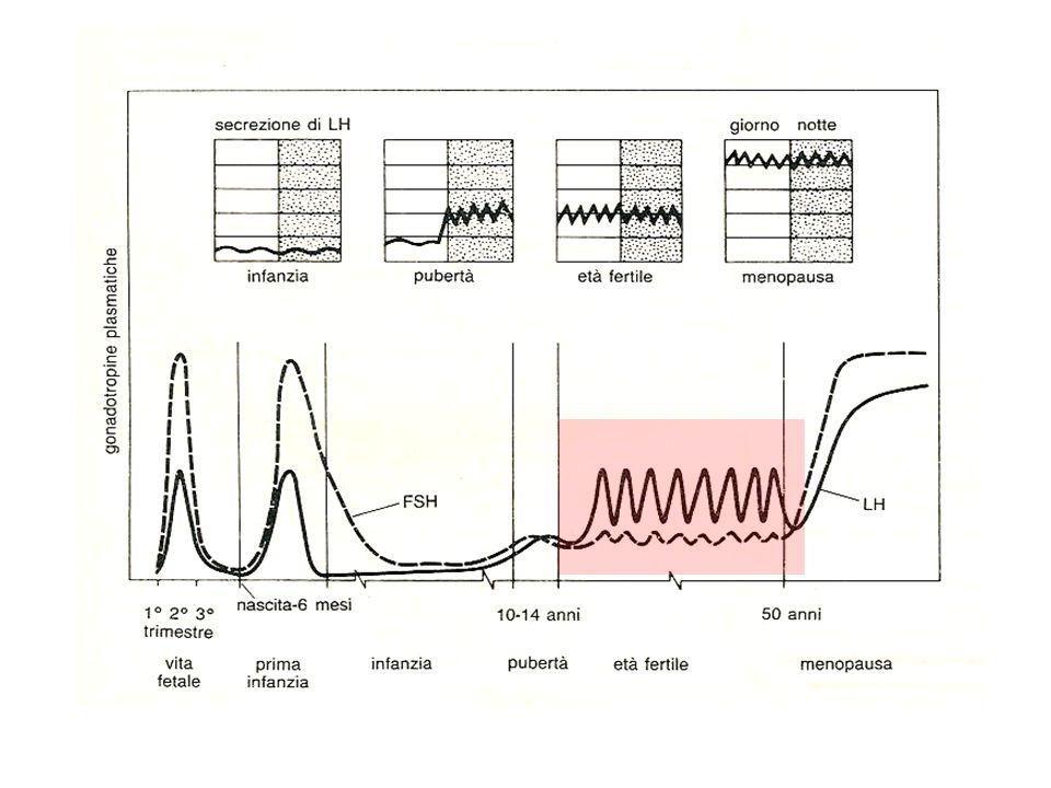ORMONI IPOTALAMO-IPOFISARI Stimola il rilascio di gonadotropine (FSH/LH) GnRH Stimola la crescita follicolare Stimola la secrezione di estrogeni FSH Induce la luteinizzazione Stimola la produzione ormonale ovarica LH