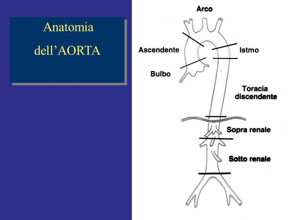 Anatomia dellAORTA Anatomia dellAORTA