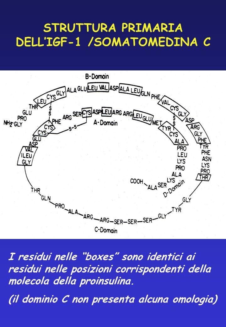 STRUTTURA PRIMARIA DELLIGF-1 /SOMATOMEDINA C I residui nelle boxes sono identici ai residui nelle posizioni corrispondenti della molecola della proins