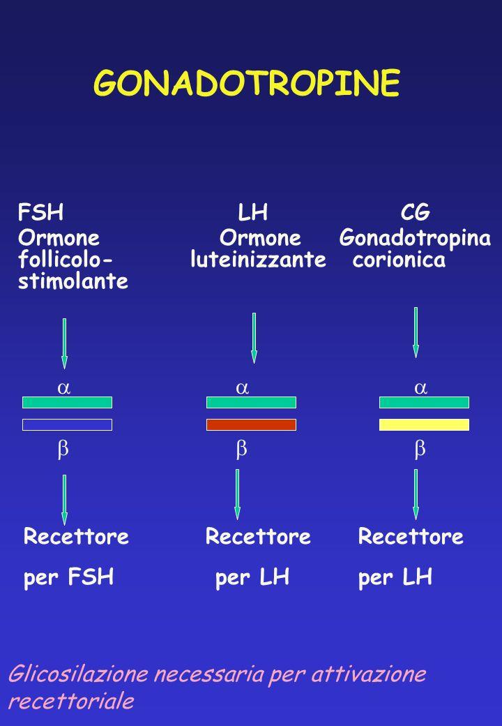GONADOTROPINE FSH LH CG Ormone Ormone Gonadotropina follicolo- luteinizzantecorionica stimolante Recettore RecettoreRecettore per FSH per LHper LH Gli
