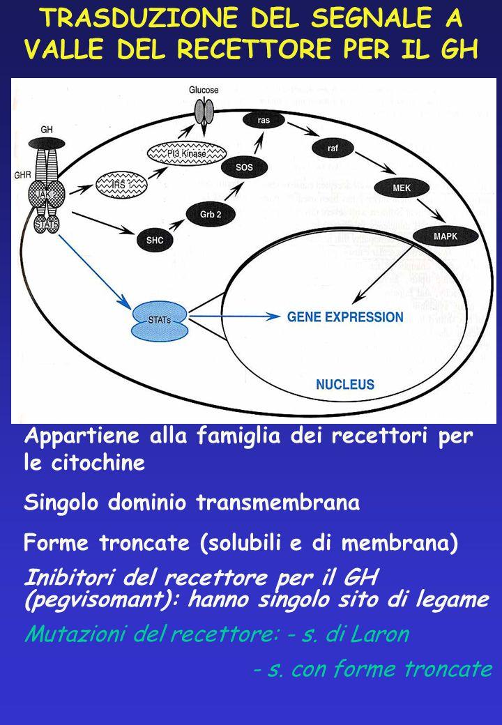 TRASDUZIONE DEL SEGNALE A VALLE DEL RECETTORE PER IL GH Appartiene alla famiglia dei recettori per le citochine Singolo dominio transmembrana Forme tr