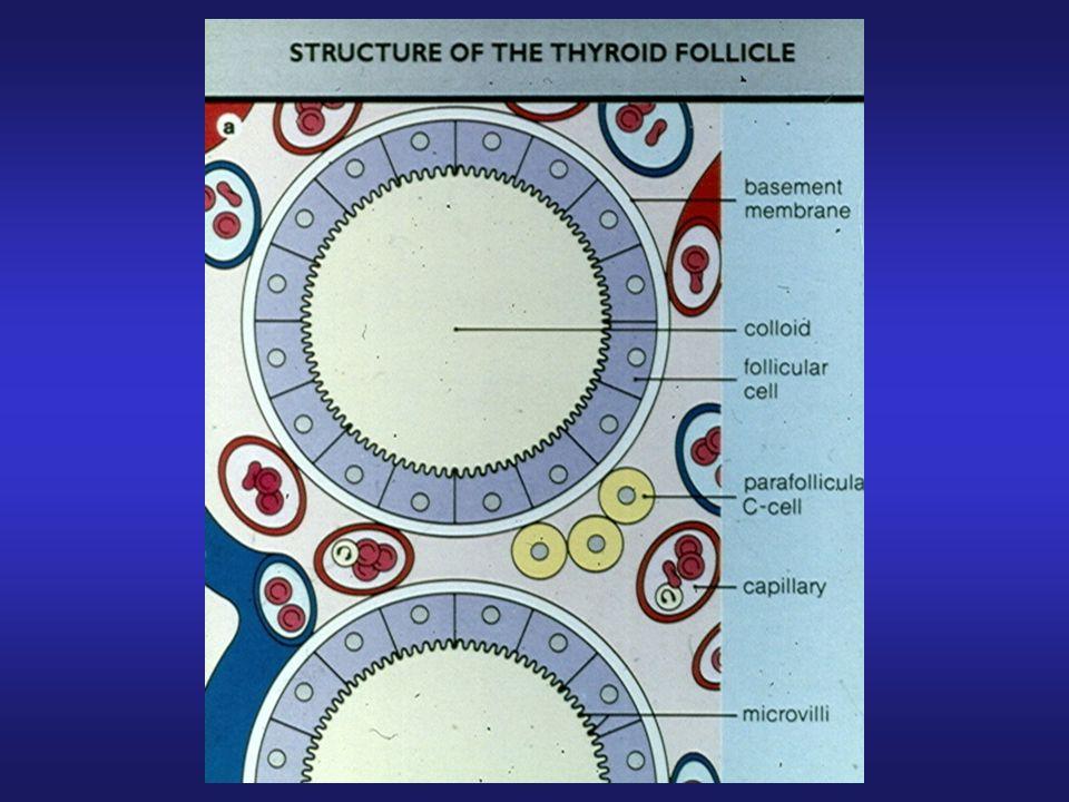 Definizione delle disfunzioni tiroidee Ipotirodismo Clinico: riduzione FT3 e FT4, elevazione TSH Subclinico: normali FT3 e FT4, elevazione TSH Ipertiroidismo Clinico: elevazione FT3 e FT4, soppressione TSH Subclinico: normali FT3 e FT4, riduzione/soppressione TSH Screening TSH come test di prima linea FT3, FT4, autoanticorpi anti-TPO, anti-tireoglobulina, anti-recettore TSH in presenza di TSH anormale