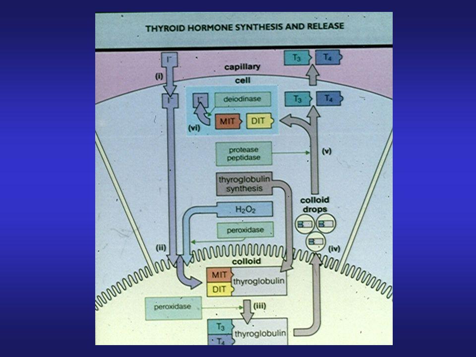 Trattamento ormonale sostitutivo: Tiroxina (T4): -25-150 ug/die, somministrazione orale giornaliera -Obiettivo TSH tra 1.0 e 2.0 mU/L -Inizio a basse dosi, crescita graduale T3: -poco utilizzata, a volte in associazione a tiroxina Controlli: -con terapia a regime, FT3, FT4 e TSH ogni 12-18 mesi IPOTIROIDISMO: TERAPIA