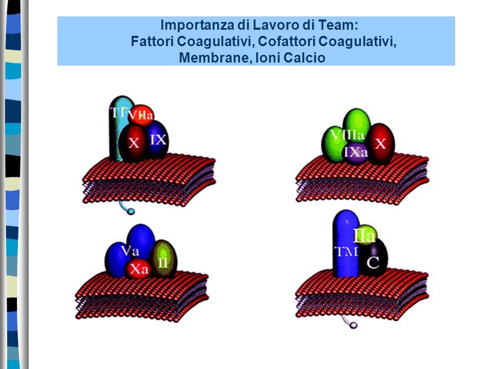 Importanza di Lavoro di Team: Fattori Coagulativi, Cofattori Coagulativi, Membrane, Ioni Calcio