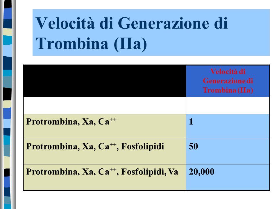 Velocità di Generazione di Trombina (IIa) Protrombina, Xa, Ca ++ 1 Protrombina, Xa, Ca ++, Fosfolipidi50 Protrombina, Xa, Ca ++, Fosfolipidi, Va20,000