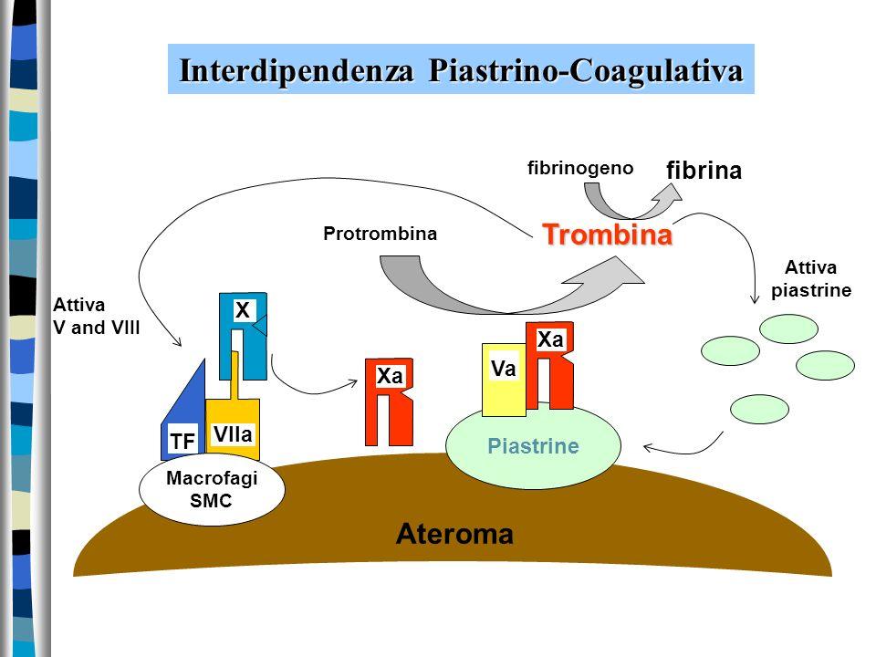 Interdipendenza Piastrino-Coagulativa TF VIIa Xa X Piastrine Macrofagi SMC Xa Va Protrombina Trombina Ateroma fibrinogeno fibrina Attiva V and VIII At