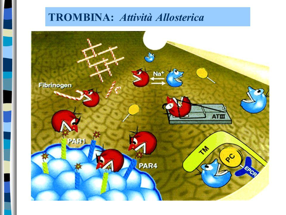 TROMBINA: Attività Allosterica