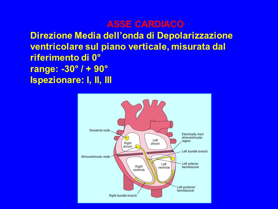 ASSE CARDIACO Direzione Media dellonda di Depolarizzazione ventricolare sul piano verticale, misurata dal riferimento di 0° range: -30° / + 90° Ispezi