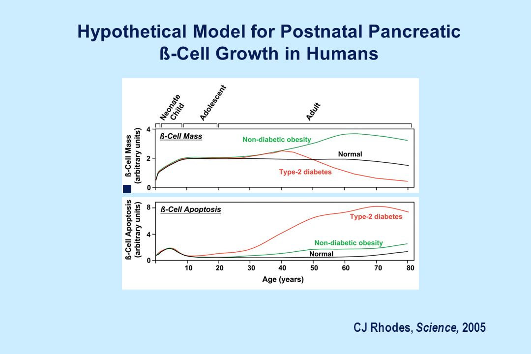 Hypothetical Model for Postnatal Pancreatic ß-Cell Growth in Humans CJ Rhodes, Science, 2005