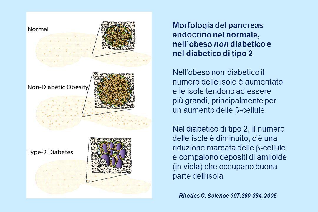 Rhodes C. Science 307:380-384, 2005 Morfologia del pancreas endocrino nel normale, nellobeso non diabetico e nel diabetico di tipo 2 Nellobeso non-dia