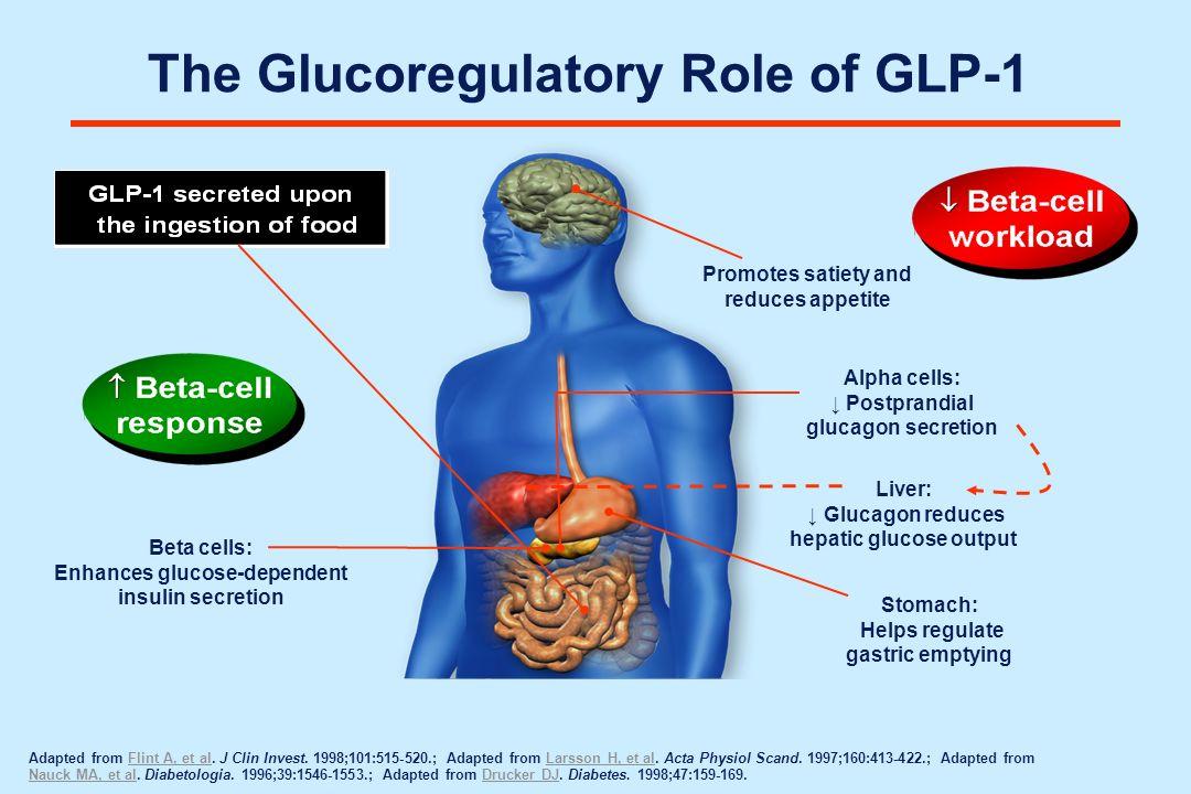 The Glucoregulatory Role of GLP-1 Beta cells: Enhances glucose-dependent insulin secretion Adapted from Flint A, et al. J Clin Invest. 1998;101:515-52