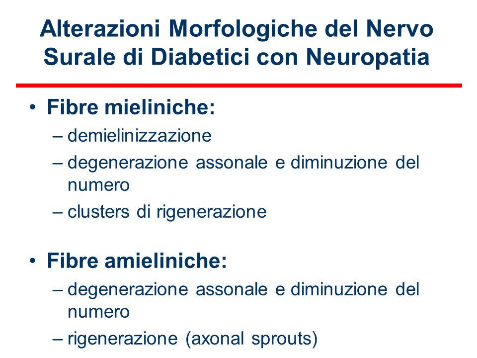 Alterazioni Morfologiche del Nervo Surale di Diabetici con Neuropatia Fibre mieliniche: –demielinizzazione –degenerazione assonale e diminuzione del n