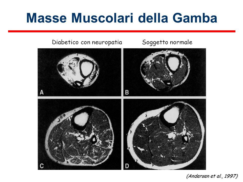 Masse Muscolari della Gamba Soggetto normaleDiabetico con neuropatia (Andersen et al., 1997)