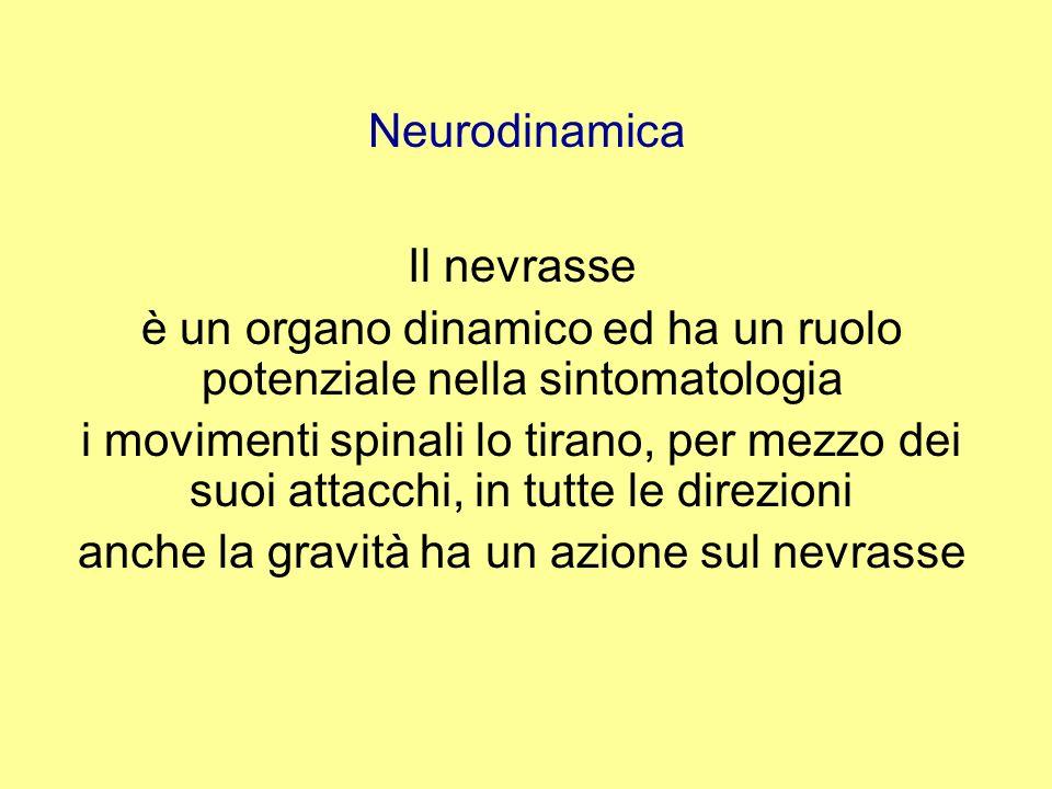 Neurodinamica Aderenza della radice per fibrosi, il tessuto cicatriziale impedisce ladattamento del tessuto neurale ai cambiamenti di tensione aderenze si possono formare tra strutture adiacenti per esempio strutture neurali : la dura strutture non neurali : il canale spinale
