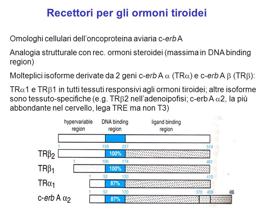 Recettori per gli ormoni tiroidei Omologhi cellulari delloncoproteina aviaria c-erb A Analogia strutturale con rec. ormoni steroidei (massima in DNA b