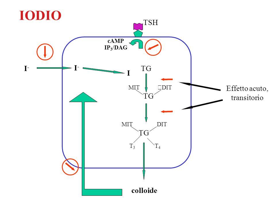IODIO TSH I-I- I-I- I TG MITDIT MITDIT T3T3 T4T4 colloide cAMP IP 3 /DAG Effetto acuto, transitorio