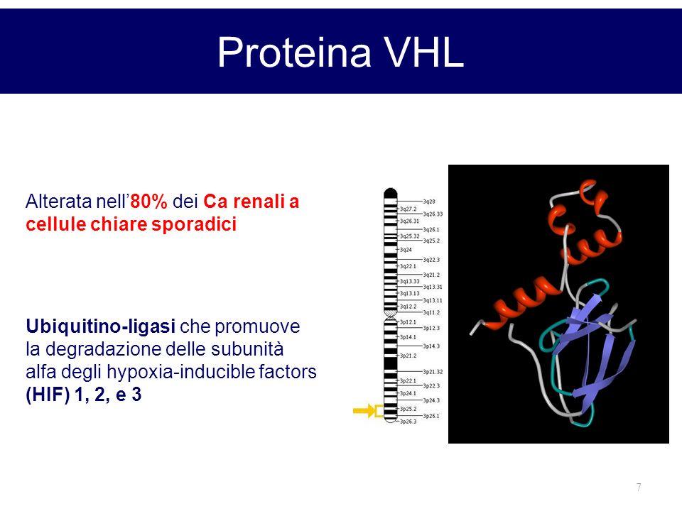 7 Proteina VHL Alterata nell80% dei Ca renali a cellule chiare sporadici Ubiquitino-ligasi che promuove la degradazione delle subunità alfa degli hypo