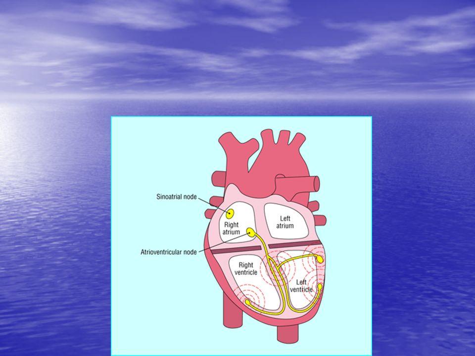 Complesso QRS Forze elettriche della depolarizzazione ventricolare Vettore 1 Vettore 1 Setto: sx vs dx; post vs ant Vettore 2 Vettore 2 Ventricoli: dx vs sx; Ant vs post Rilevanza di forze generate da parete libera di V sx
