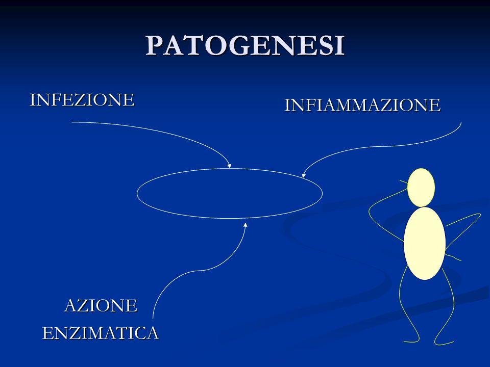 PATOGENESI INFEZIONE INFIAMMAZIONE AZIONEENZIMATICA Bronchiectasie