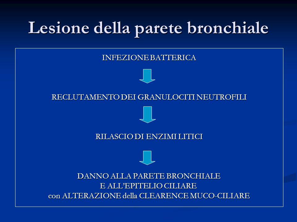 Lesione della parete bronchiale INFEZIONE BATTERICA RECLUTAMENTO DEI GRANULOCITI NEUTROFILI RILASCIO DI ENZIMI LITICI DANNO ALLA PARETE BRONCHIALE E ALLEPITELIO CILIARE con ALTERAZIONE della CLEARENCE MUCO-CILIARE