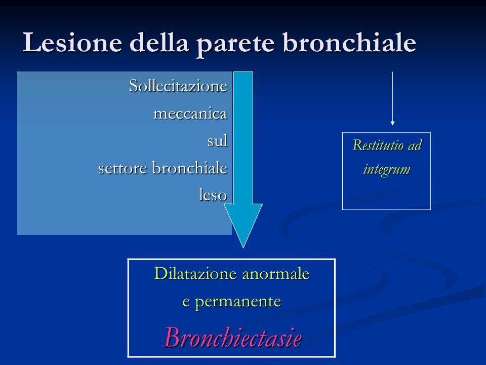 Sollecitazionemeccanicasul settore bronchiale leso Dilatazione anormale e permanente Bronchiectasie Restitutio ad integrum Lesione della parete bronchiale
