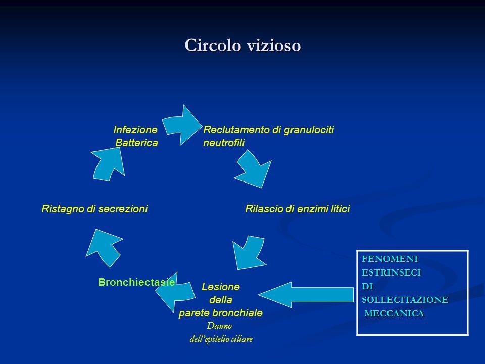 Circolo vizioso Reclutamento di granulociti neutrofili Rilascio di enzimi litici Lesione della parete bronchiale Danno dellepitelio ciliare Bronchiectasie Ristagno di secrezioni Infezione Batterica FENOMENIESTRINSECIDISOLLECITAZIONE MECCANICA MECCANICA