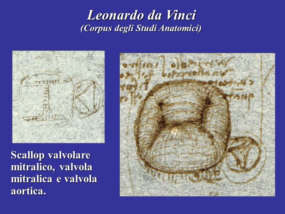 Scallop valvolare mitralico, valvola mitralica e valvola aortica. Leonardo da Vinci (Corpus degli Studi Anatomici)