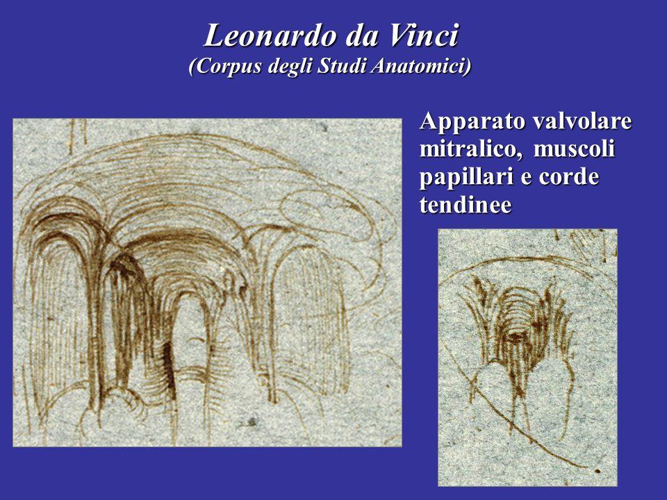 Leonardo da Vinci Apparato valvolare mitralico, muscoli papillari e corde tendinee (Corpus degli Studi Anatomici)