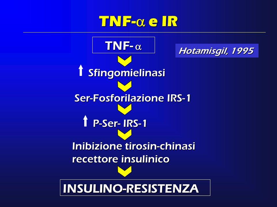 TNF- TNF- TNF- e IR Sfingomielinasi INSULINO-RESISTENZA Ser-Fosforilazione IRS-1 P-Ser- IRS-1 Inibizione tirosin-chinasi recettore insulinico Hotamisg