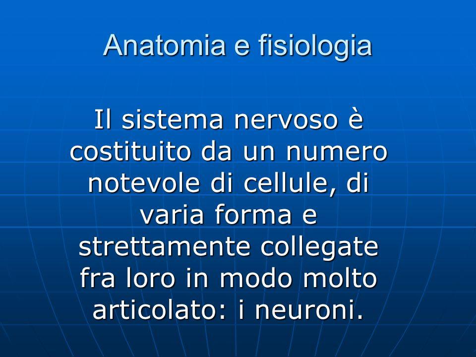 Anatomia e fisiologia Il sistema nervoso è costituito da un numero notevole di cellule, di varia forma e strettamente collegate fra loro in modo molto articolato: i neuroni.