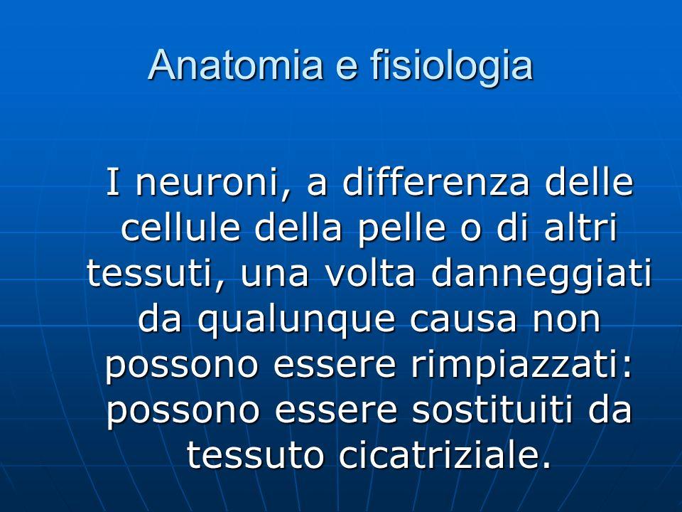 Anatomia e fisiologia I neuroni, a differenza delle cellule della pelle o di altri tessuti, una volta danneggiati da qualunque causa non possono essere rimpiazzati: possono essere sostituiti da tessuto cicatriziale.
