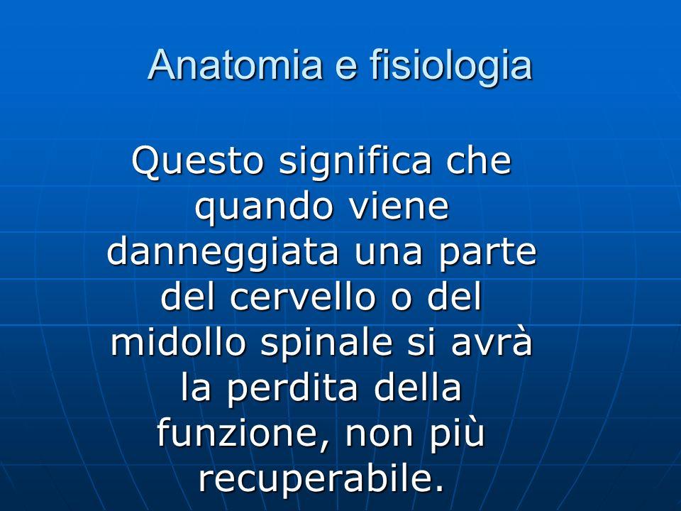 Anatomia e fisiologia Questo significa che quando viene danneggiata una parte del cervello o del midollo spinale si avrà la perdita della funzione, non più recuperabile.