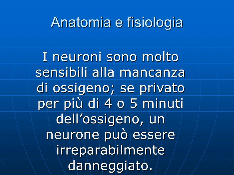 Anatomia e fisiologia I neuroni sono molto sensibili alla mancanza di ossigeno; se privato per più di 4 o 5 minuti dellossigeno, un neurone può essere irreparabilmente danneggiato.