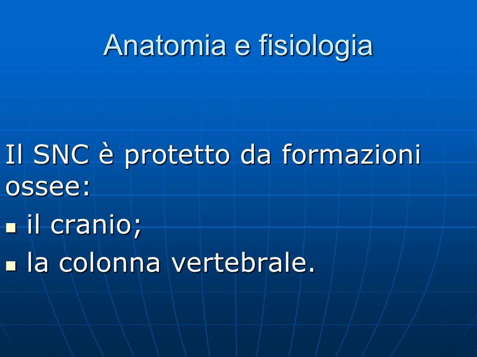 Anatomia e fisiologia Il SNC è protetto da formazioni ossee: il cranio; il cranio; la colonna vertebrale.
