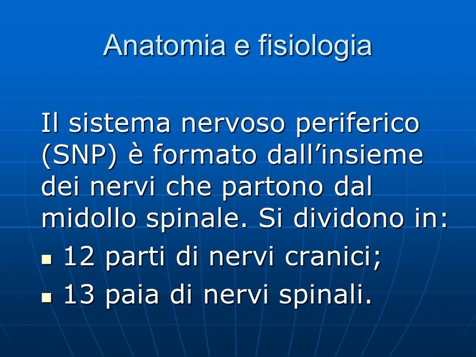 Anatomia e fisiologia Il sistema nervoso periferico (SNP) è formato dallinsieme dei nervi che partono dal midollo spinale.