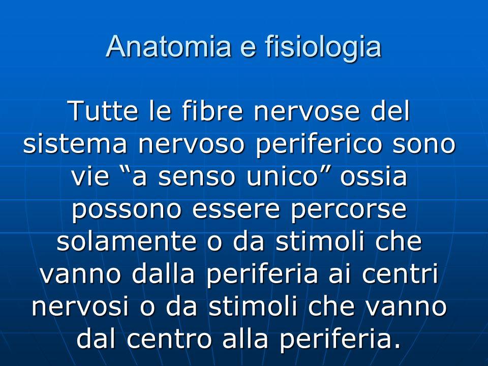 Anatomia e fisiologia Tutte le fibre nervose del sistema nervoso periferico sono vie a senso unico ossia possono essere percorse solamente o da stimoli che vanno dalla periferia ai centri nervosi o da stimoli che vanno dal centro alla periferia.