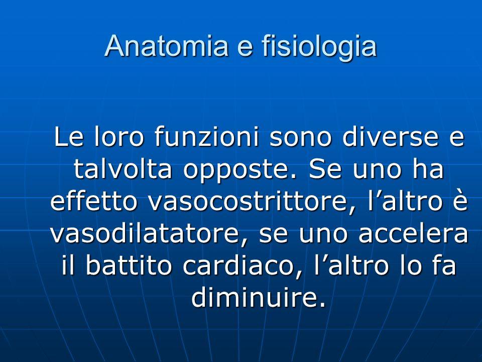 Anatomia e fisiologia Le loro funzioni sono diverse e talvolta opposte.