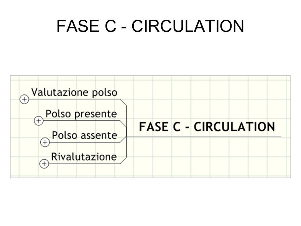 FASE C - CIRCULATION