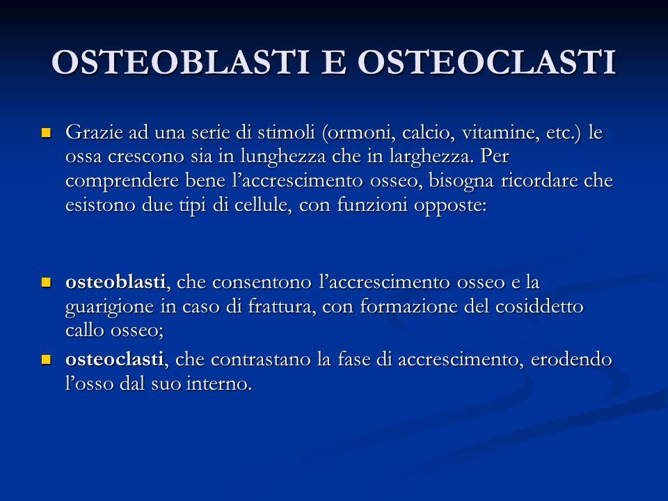 OSTEOBLASTI E OSTEOCLASTI Grazie ad una serie di stimoli (ormoni, calcio, vitamine, etc.) le ossa crescono sia in lunghezza che in larghezza. Per comp
